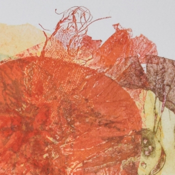 Asteraceae III - detail