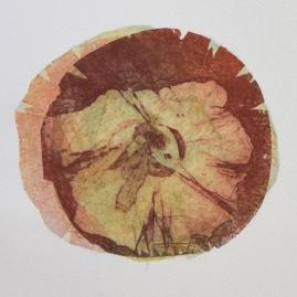 Asteraceae - detail