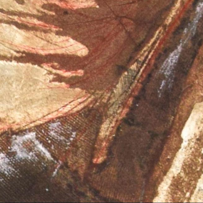 Equus Caballus III _ Detail