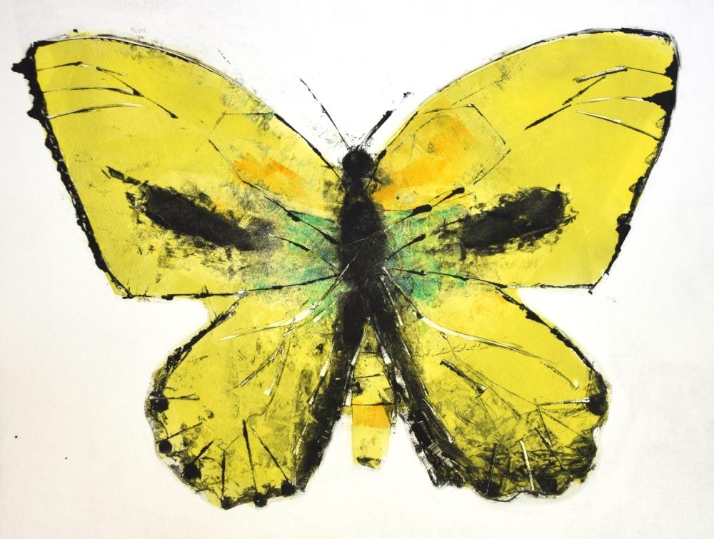 Coliadinae II