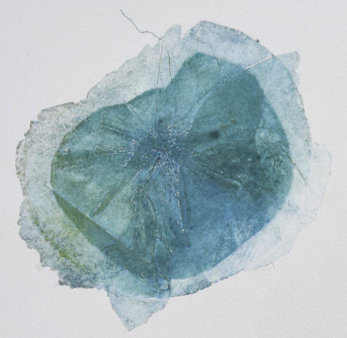cropped-2-asteraceae_detail.jpg